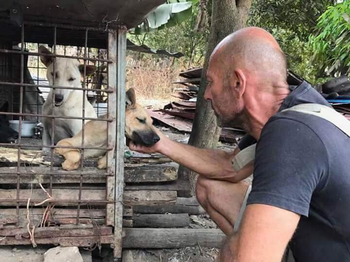 rescue dogs from Thailand with Michael